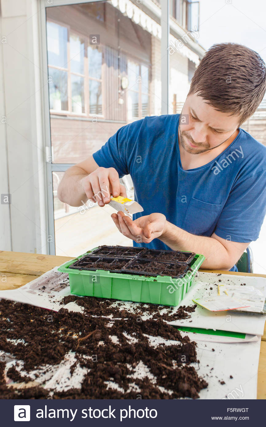 Sweden, Man seeding plants - Stock Image