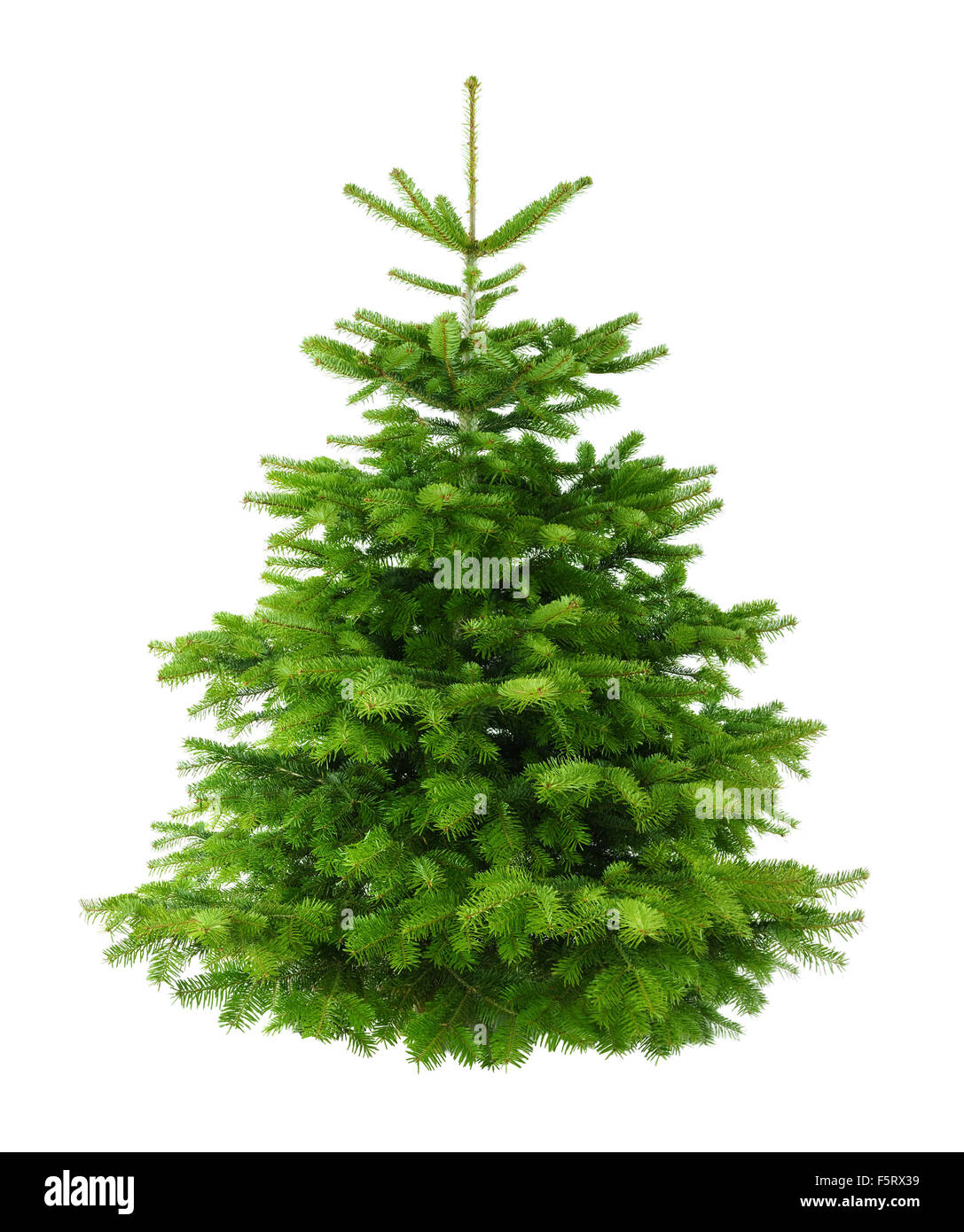 Studio shot of a fresh gorgeous Christmas tree without ornaments, isolated on white - Stock Image