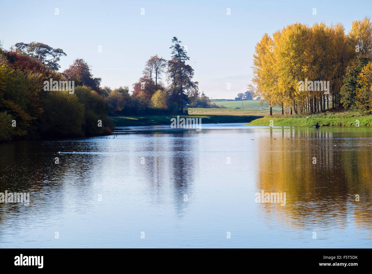 Tranquil scene with sunlit autumn trees reflected in River Tweed. Kelso, Berwickshire, Scottish Borders, Scotland, - Stock Image