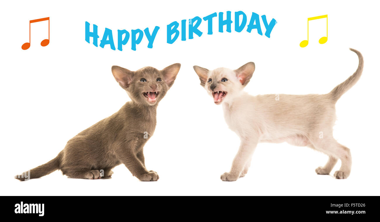 Birthday Card With Two Singing Baby Cats Happy