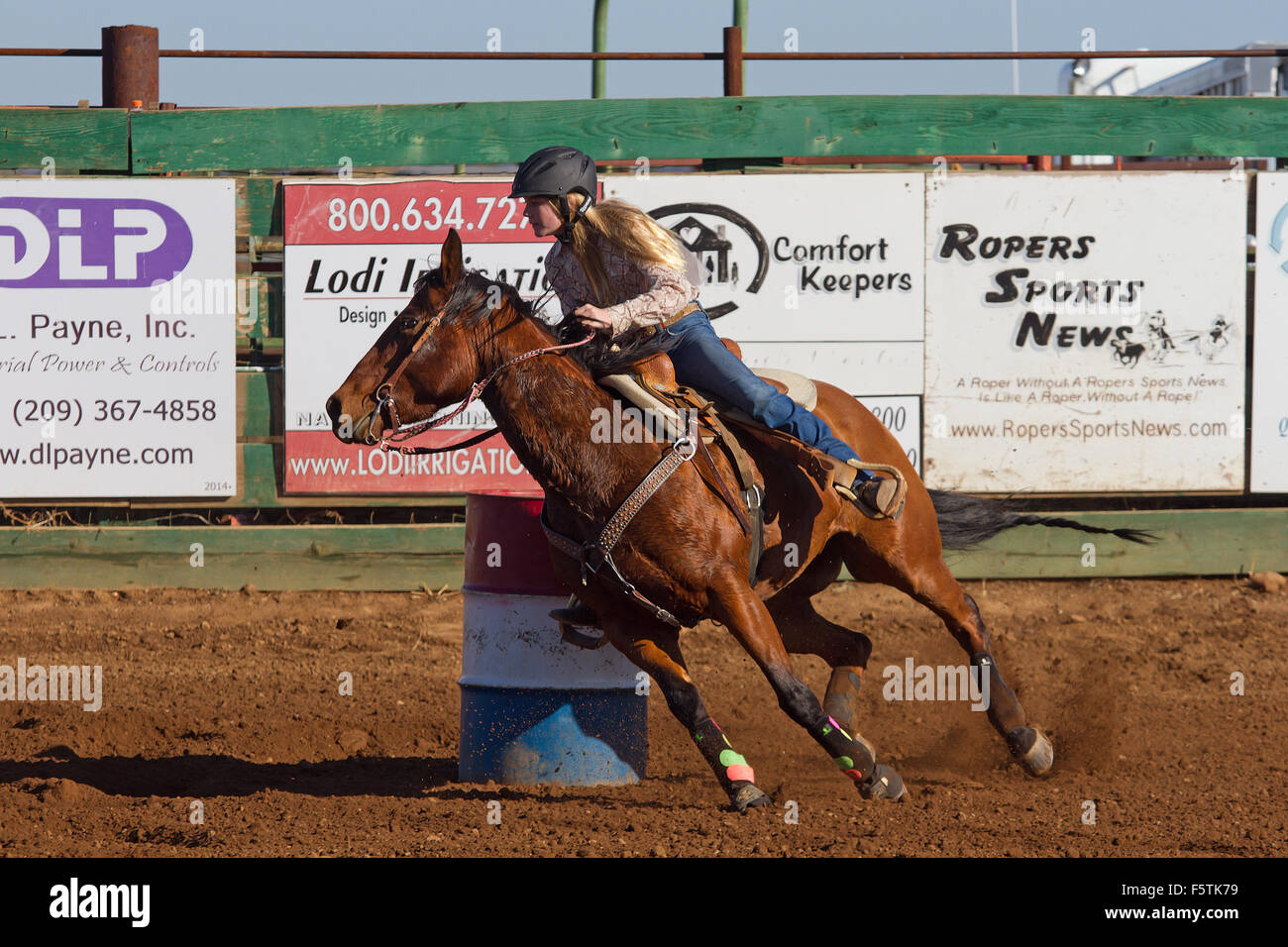 Cow Racing Stock Photos & Cow Racing Stock Images - Page 3