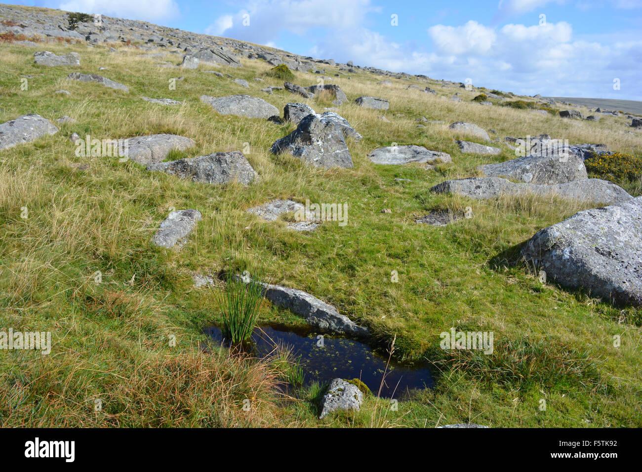 Landscape near the Staple Tors, Dartmoor National Park, Devon, England - Stock Image