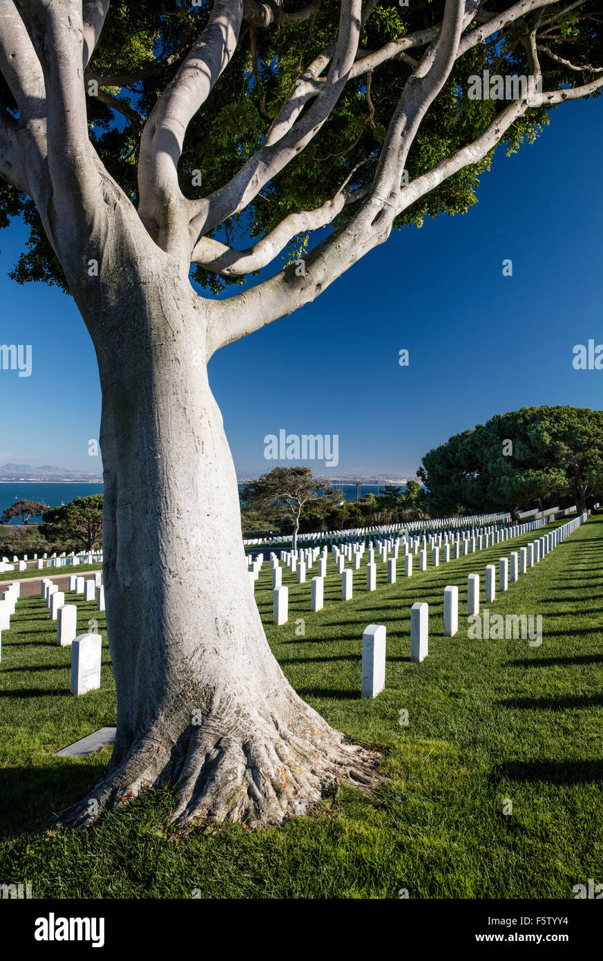 Rows of grave markers on the manicured lawn at Ft Rosecrans National Cemetery, Point Loma, San Diego, California - Stock Image