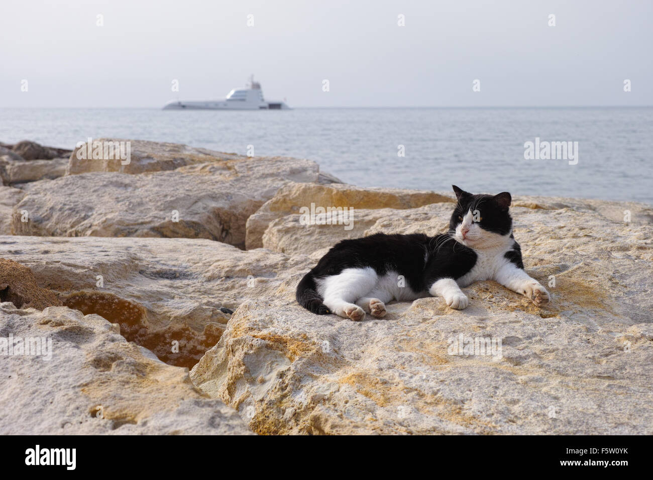 Cat laying on rocks in background of sea and yacht. - Stock Image