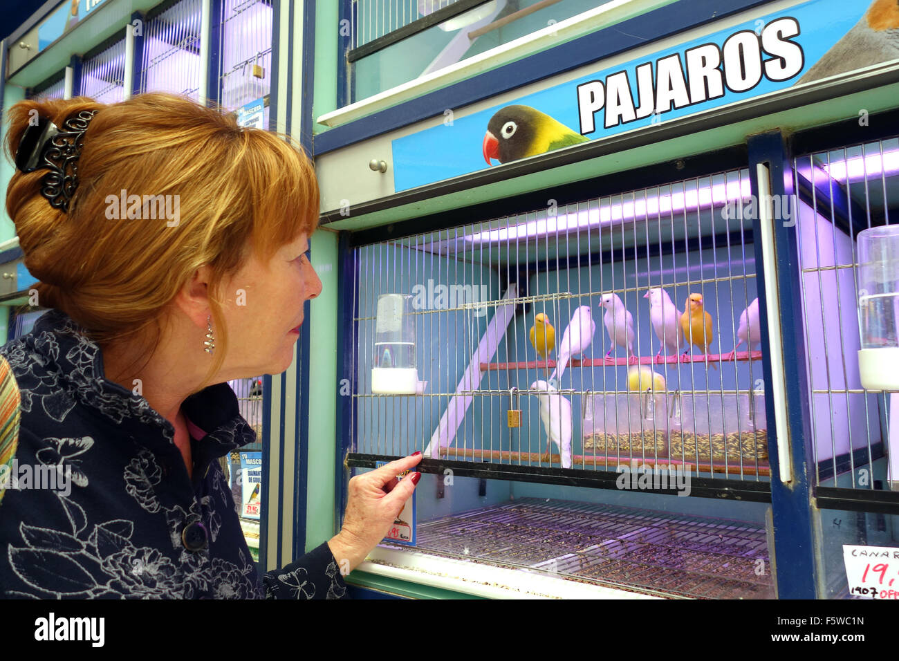 Caged birds canaries on sale in pet shop in Spain - Stock Image