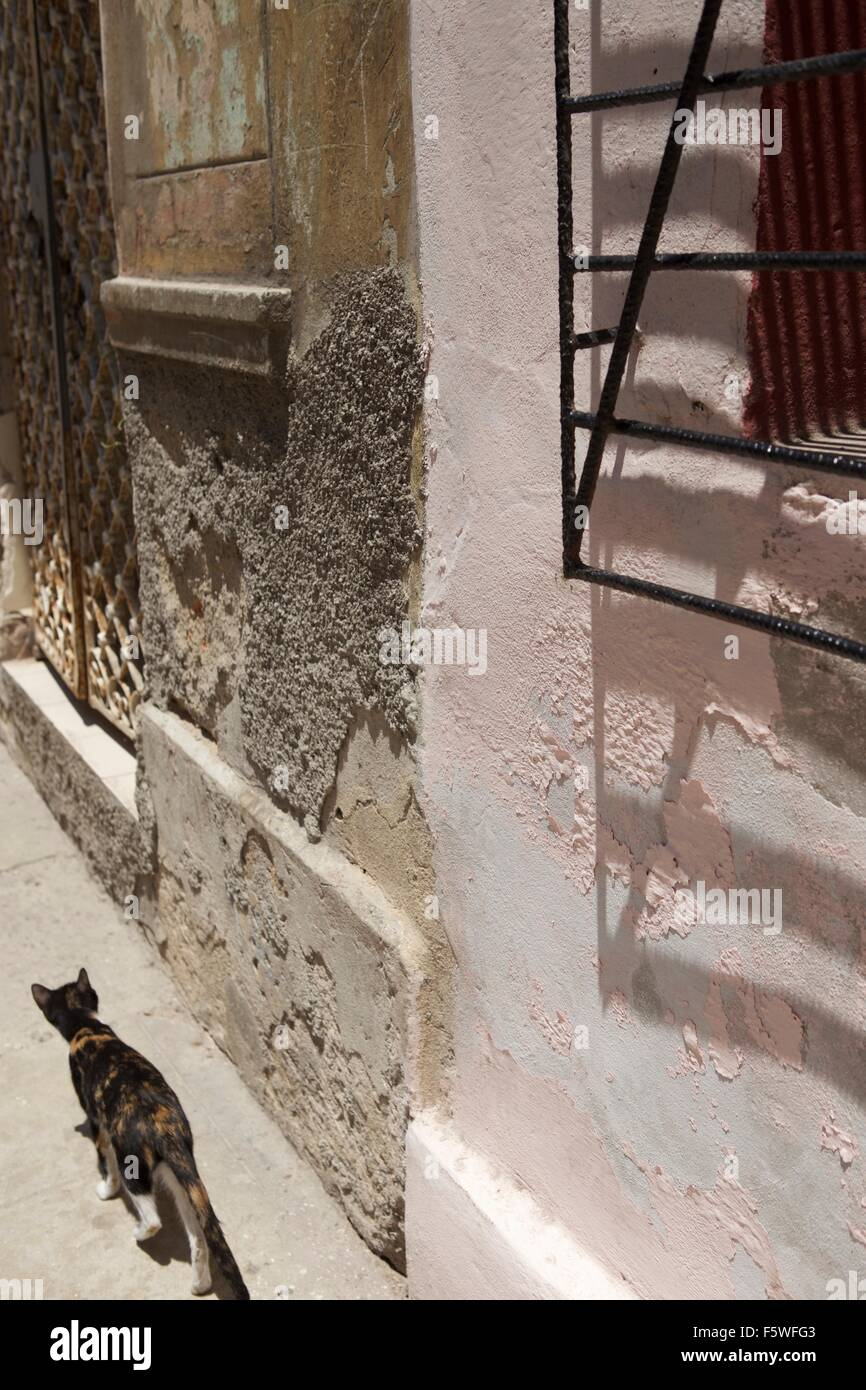 cat passing by an old colonial style house in the old town of havana rh alamy com barn style cat house barn style cat house