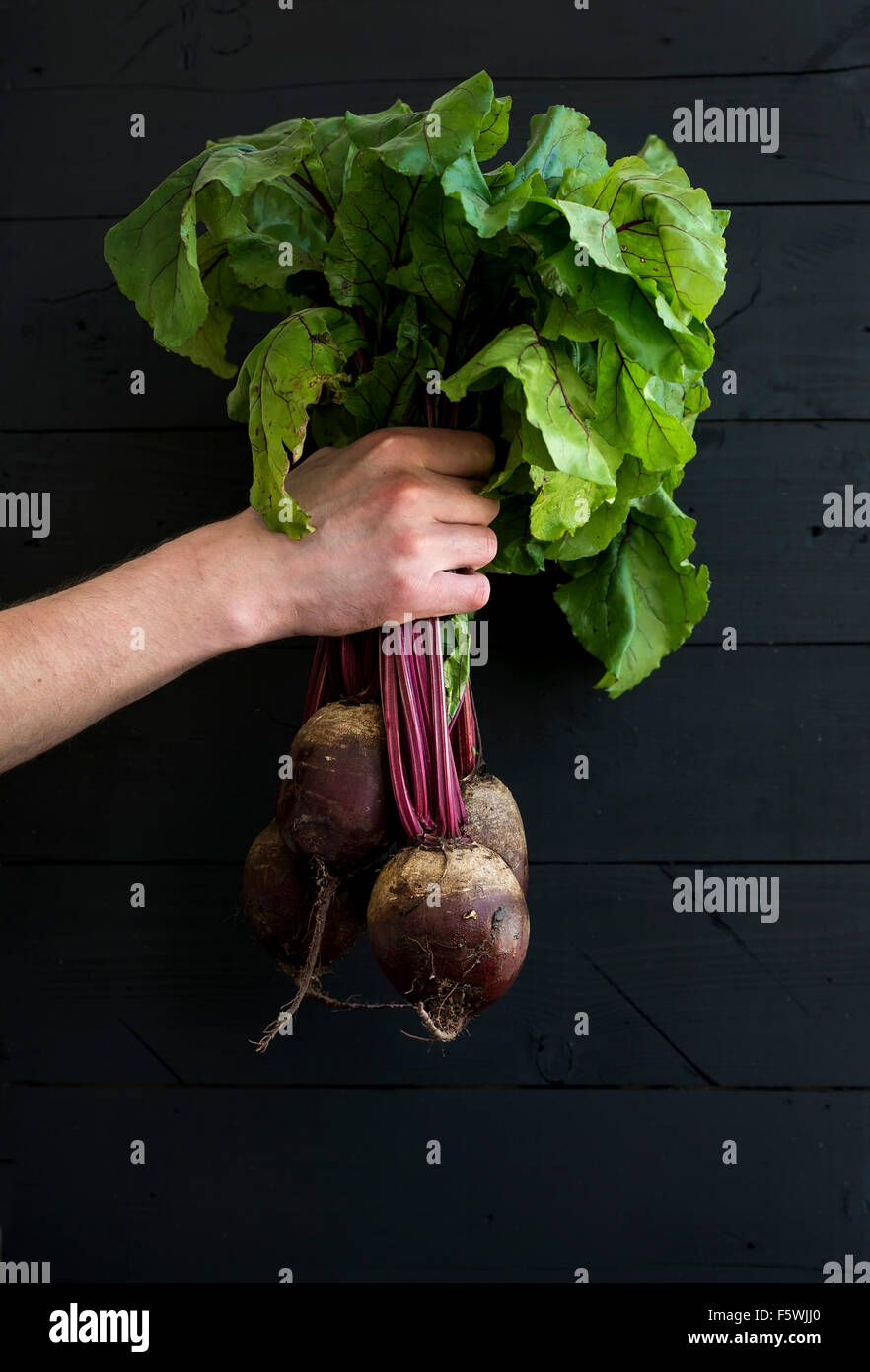 Bunch of fresh garden beetroot kept in man's hand, black wooden backdrop. - Stock Image