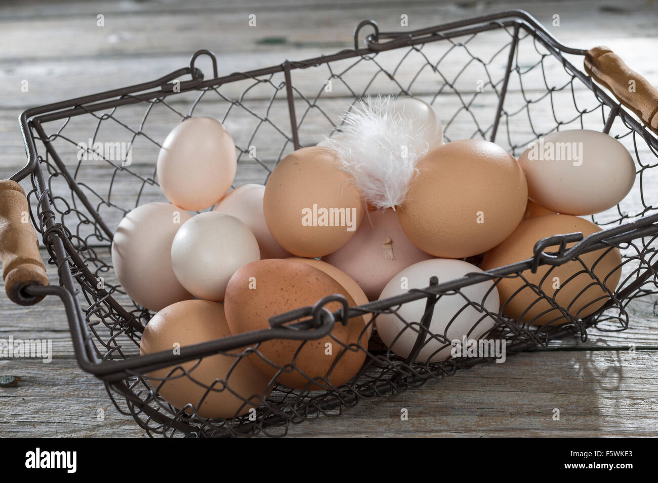Hen's egg, hen's eggs, Hühnereier, Hühnerei, Eier, Ei, glückliche Eier, freilaufende Hühner, Bioeier, Zwerghuhn, Stock Photo