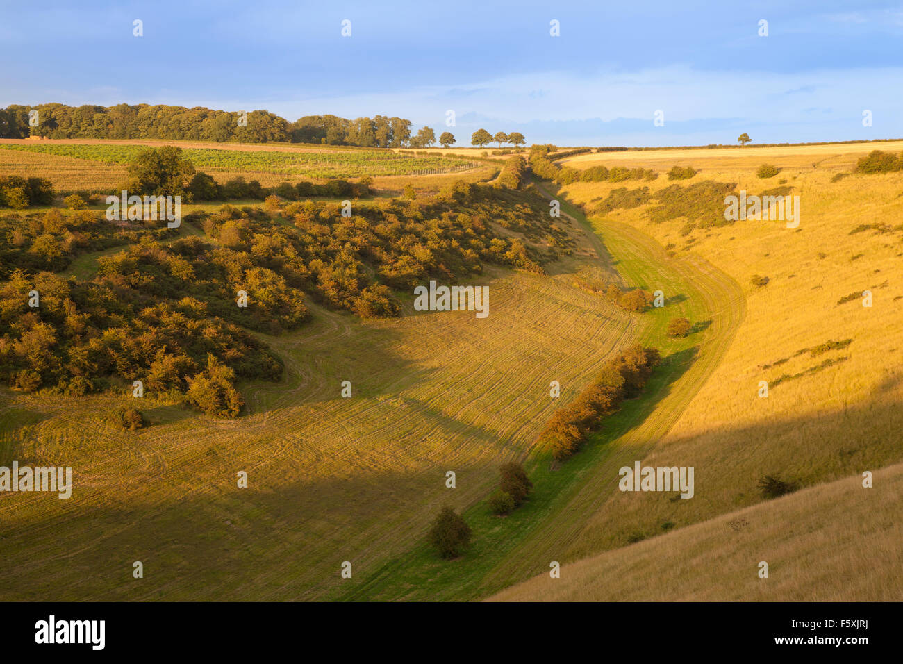 View down Sylvain Dale near Huggate in the Yorkshire Wolds, East Yorkshire, UK - Stock Image