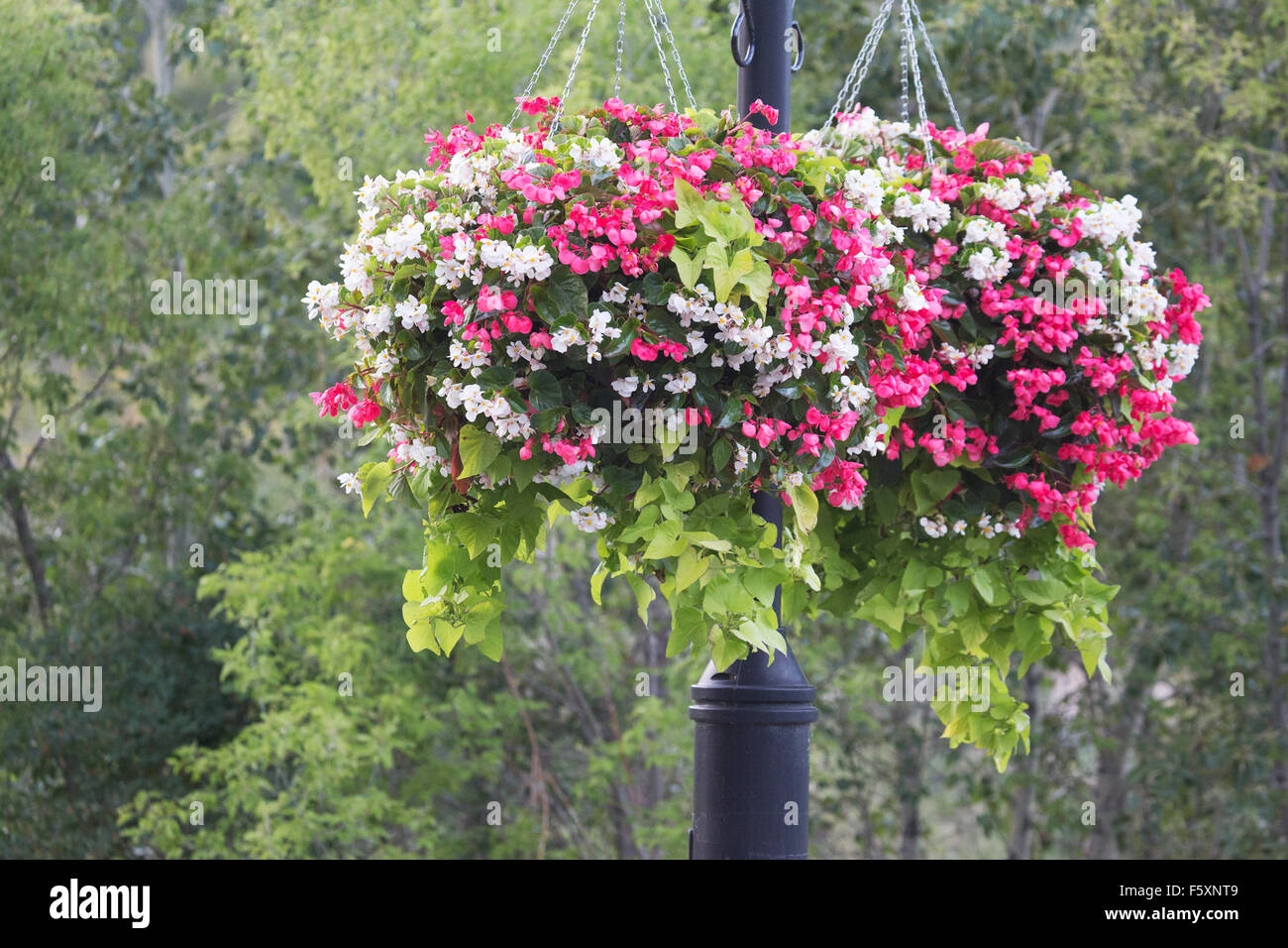 Summer flowers in hanging pots, Prince's Island Park - Stock Image