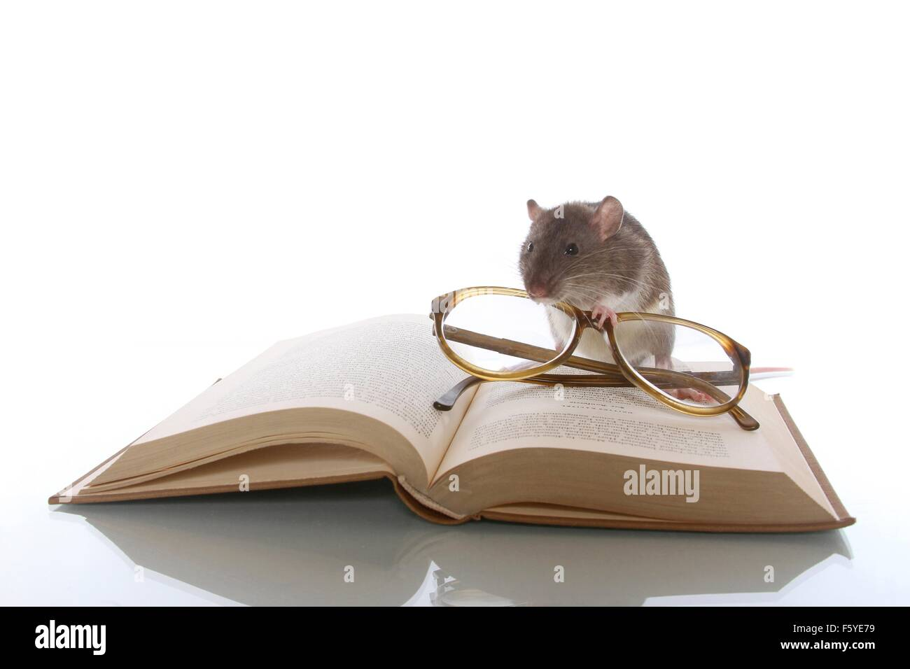 avid reader Stock Photo