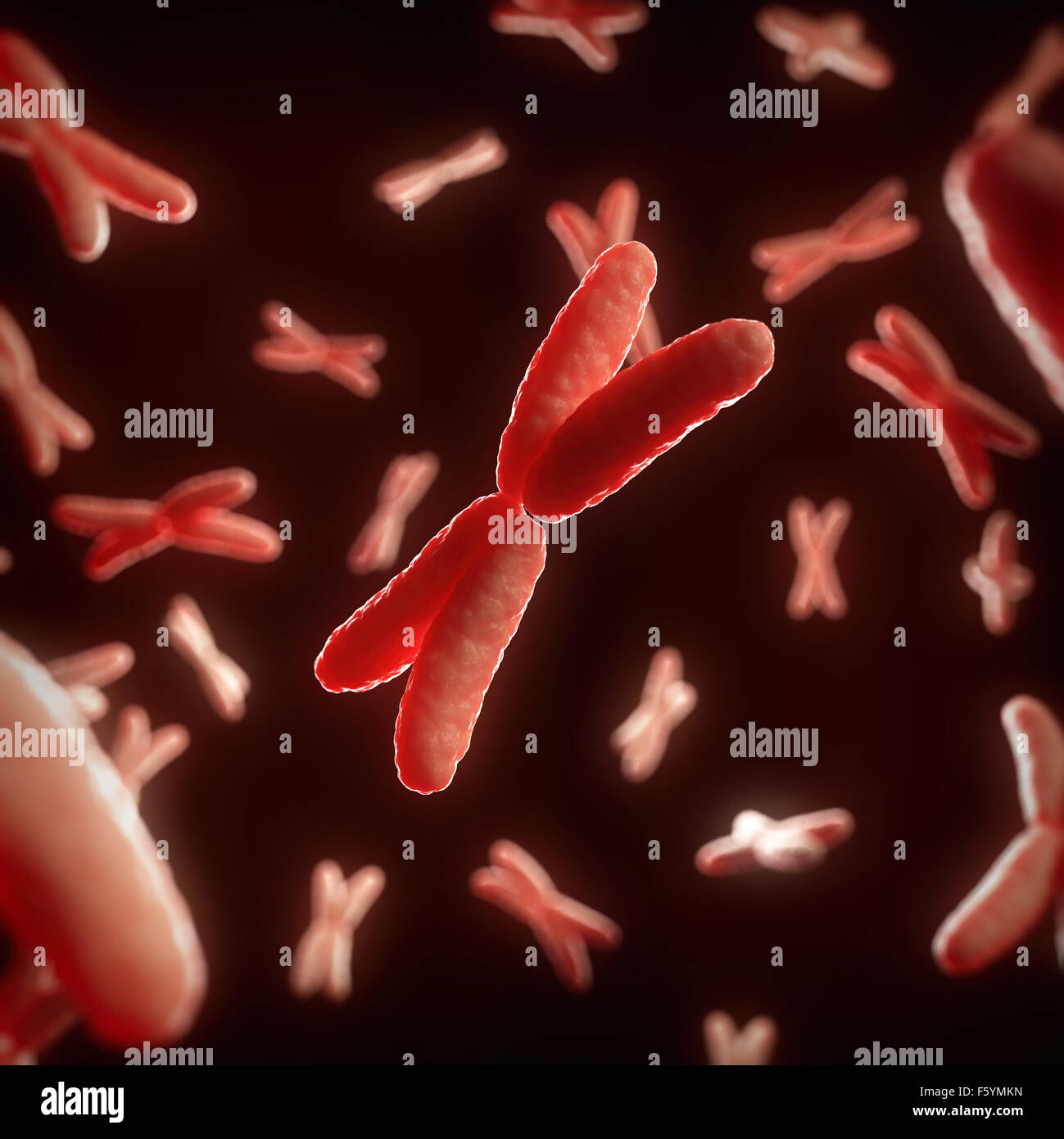 medical 3d illustration of some X chromosomes - Stock Image