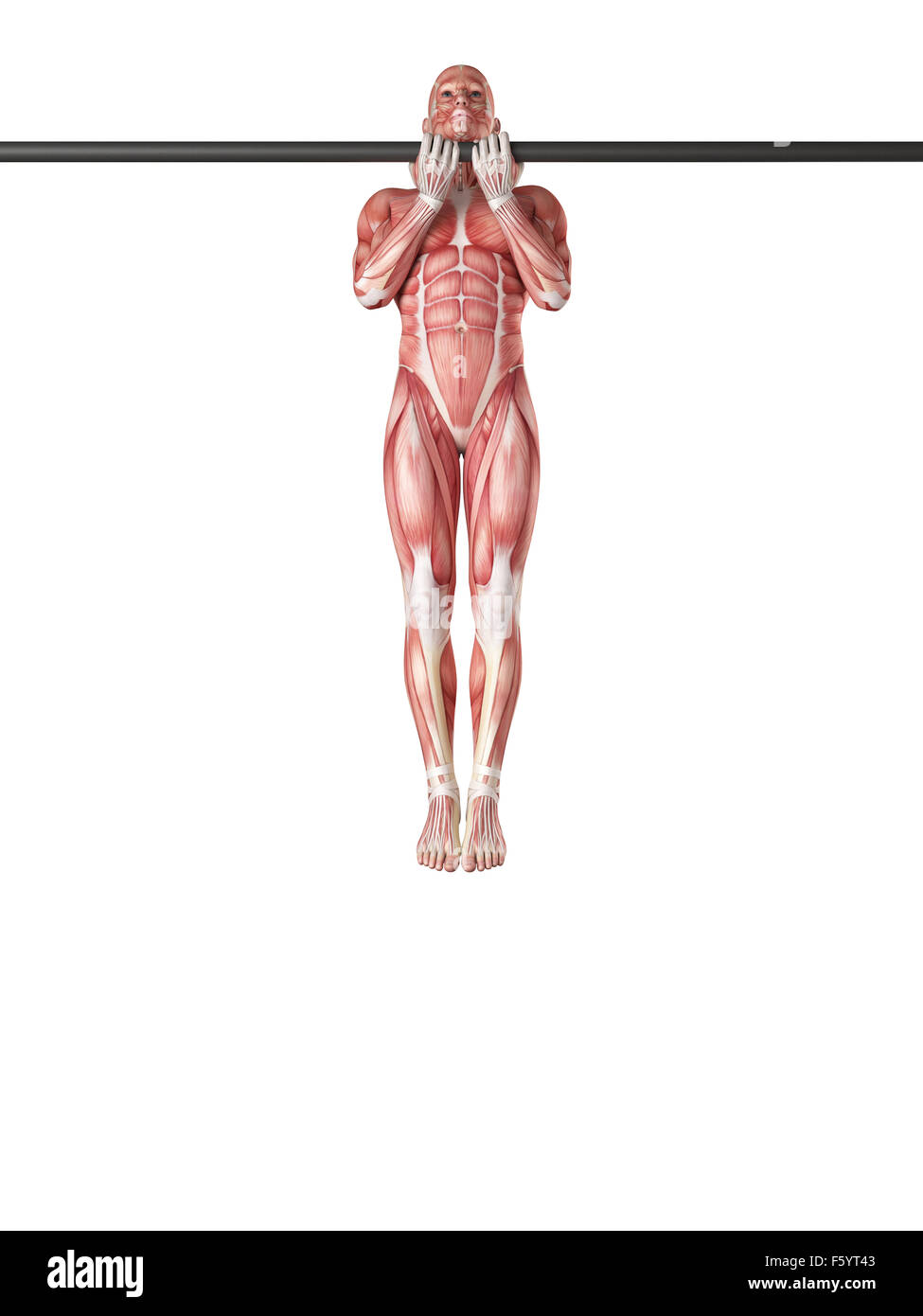 exercise illustration - close grip chin up Stock Photo: 89736755 - Alamy