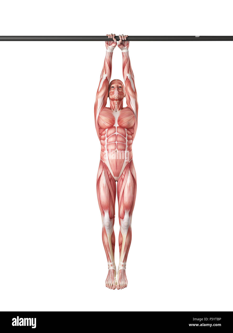 exercise illustration - close grip pull ups - Stock Image