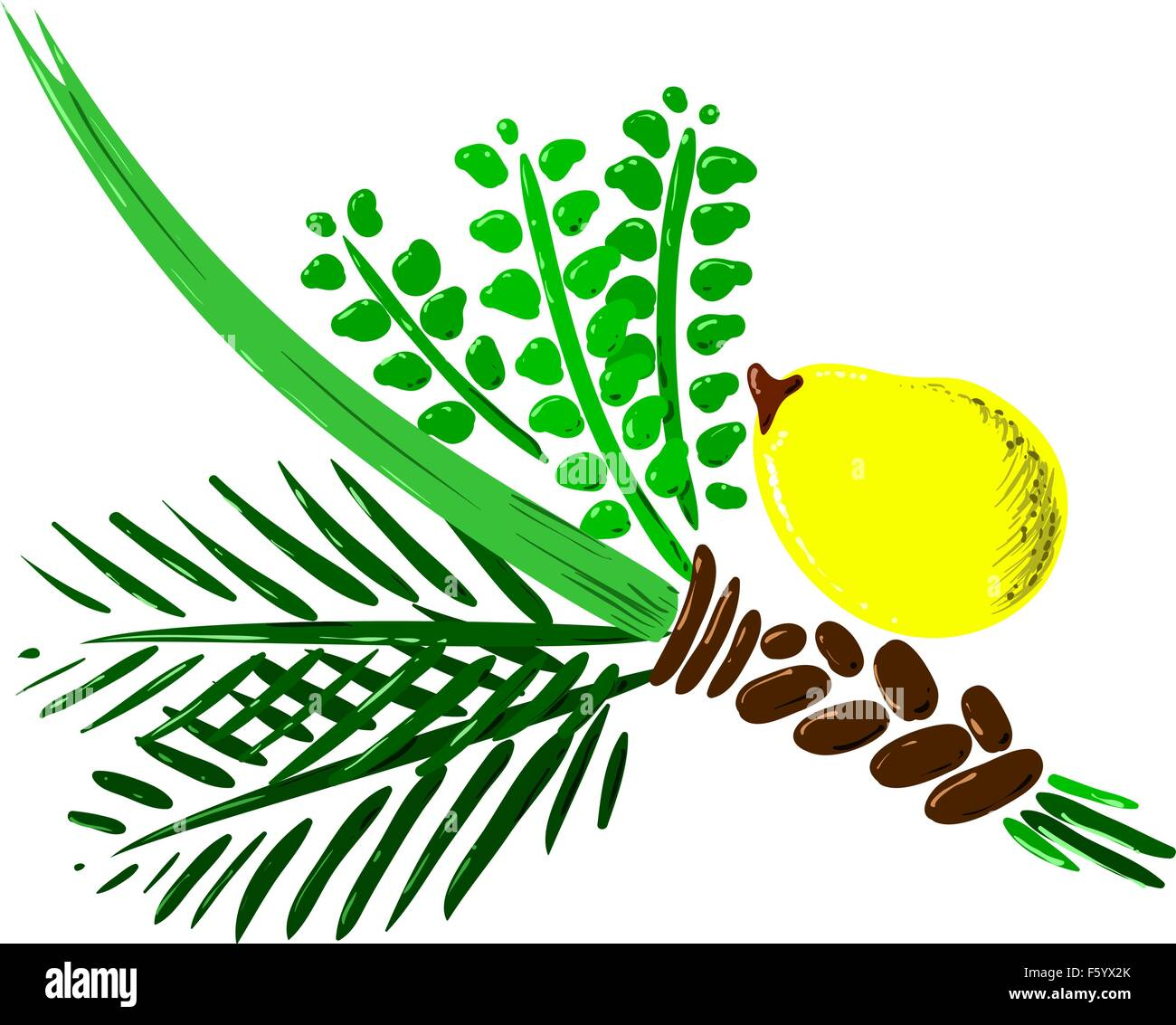 Vector illustration of the four species for Sukkot Jewish holiday. - Stock Image