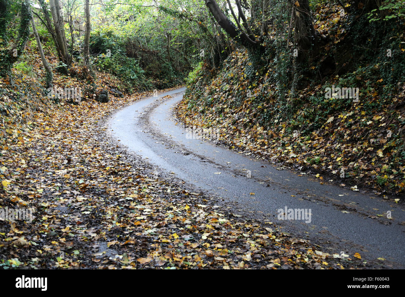 A wet road covered in wet leaves making for a very slippery surface - Stock Image
