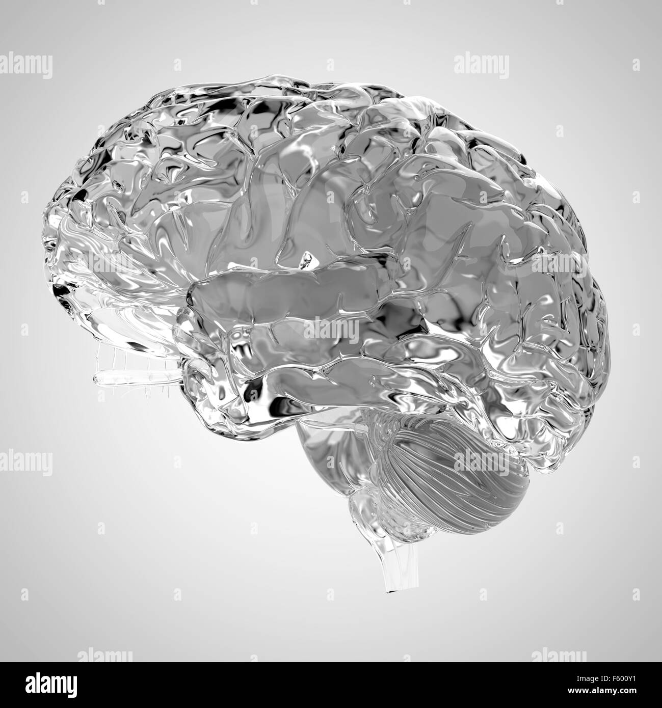 medically accurate illustration of a glas brain - Stock Image