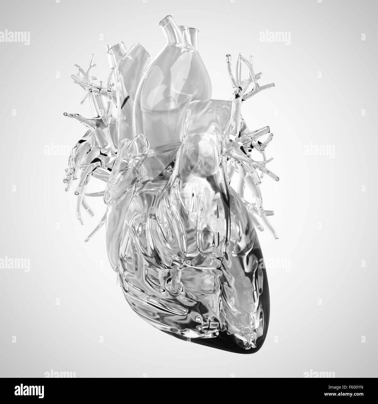 medically accurate illustration of human heart made of glass - Stock Image