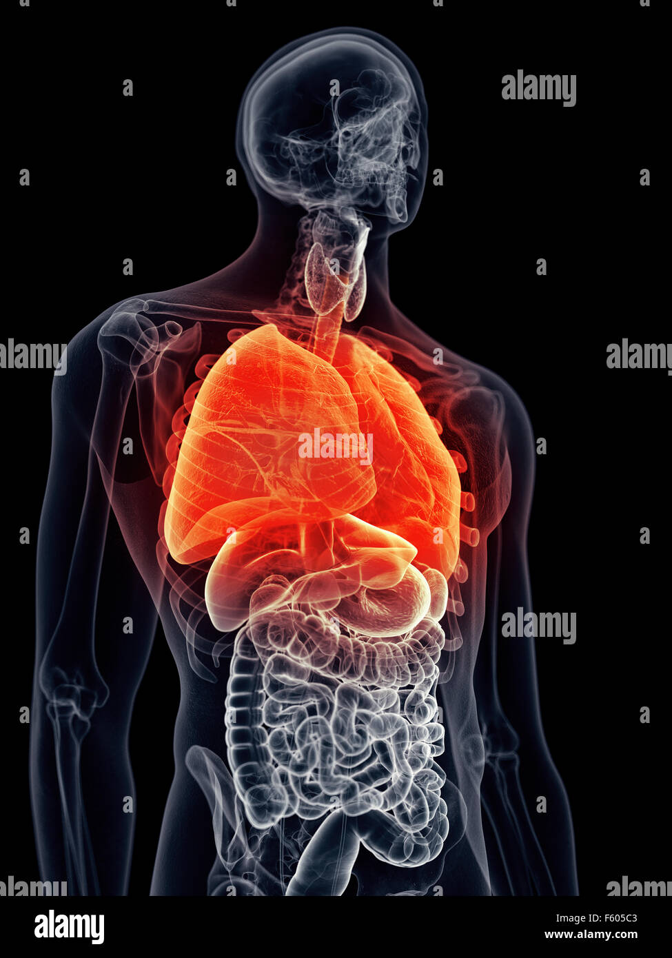medically accurate illustration - painful lung - Stock Image