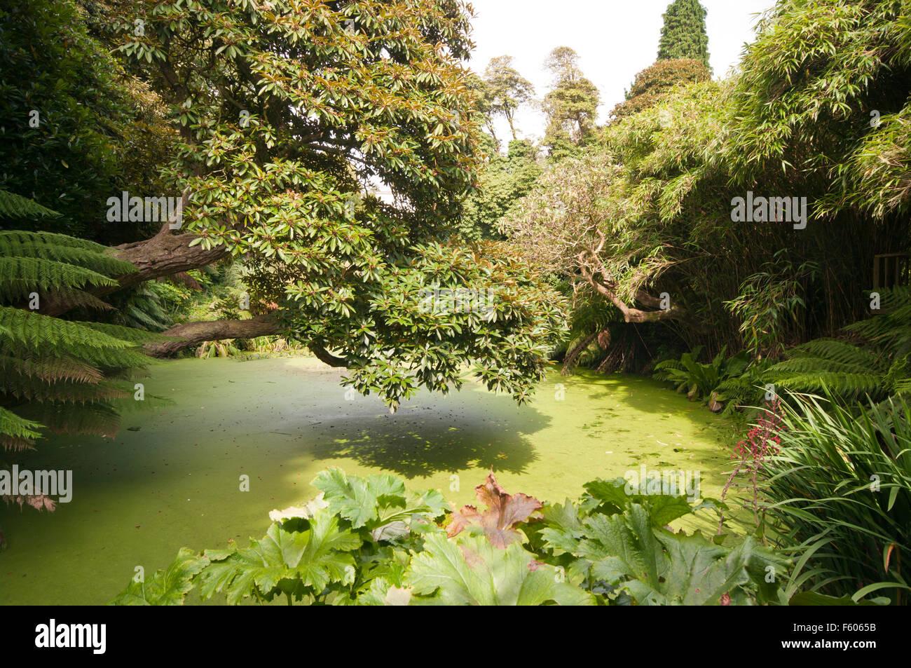 Heligan Stock Photos & Heligan Stock Images - Alamy