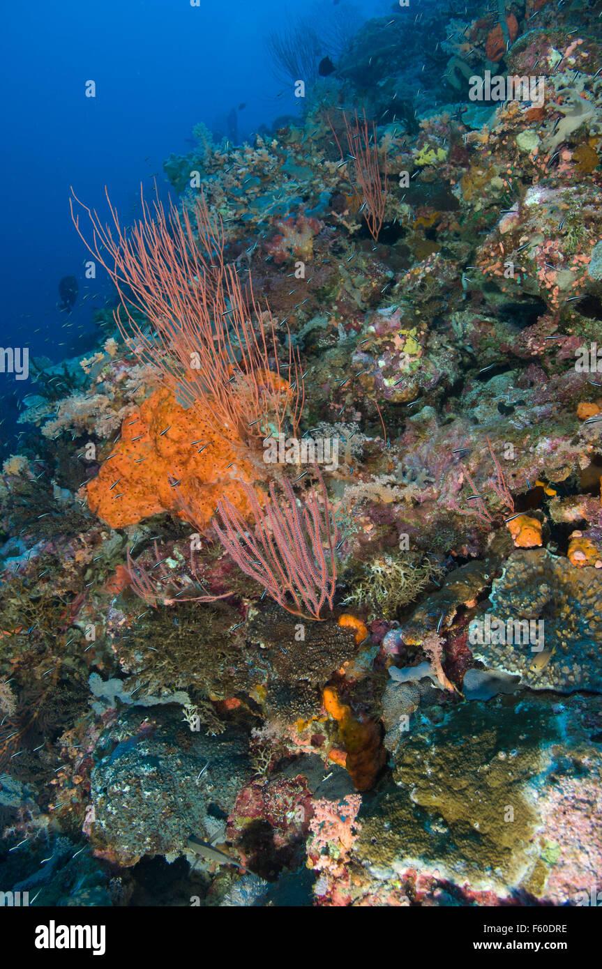 Solomons sea scape - Stock Image