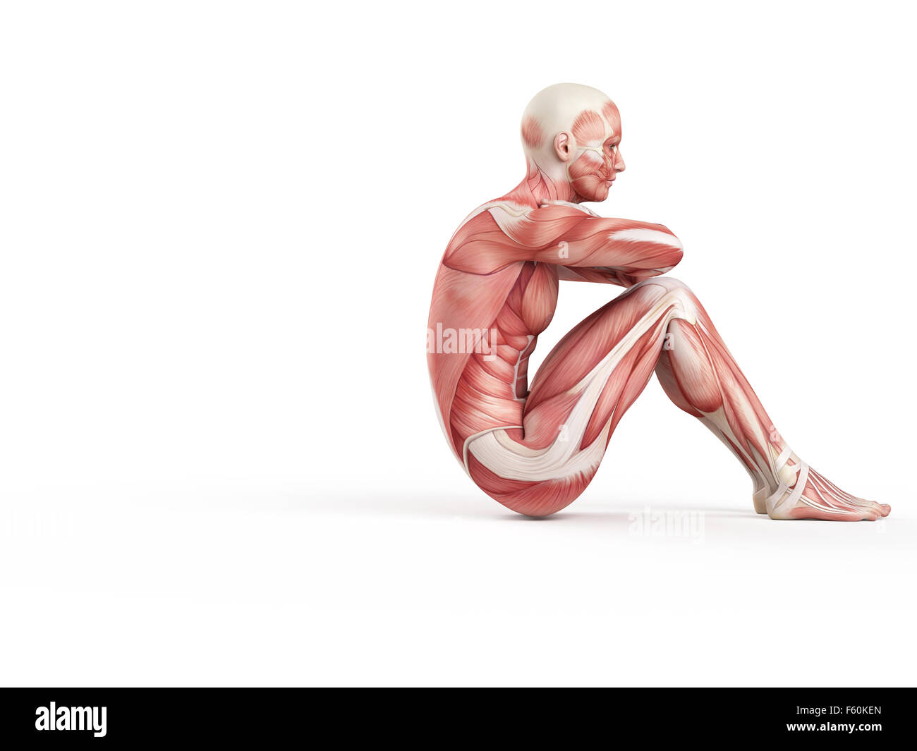 exercise illustration - negative situp - Stock Image