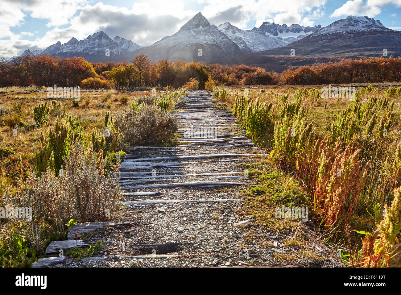 Path through bog, Tierra del Fuego National Park, Argentina - Stock Image