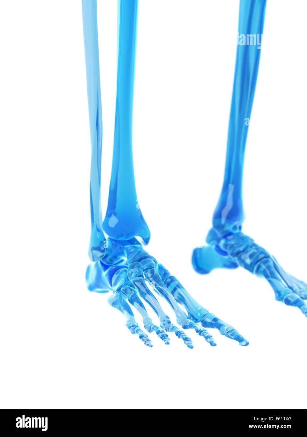 medically accurate illustration of the foot bones - Stock Image