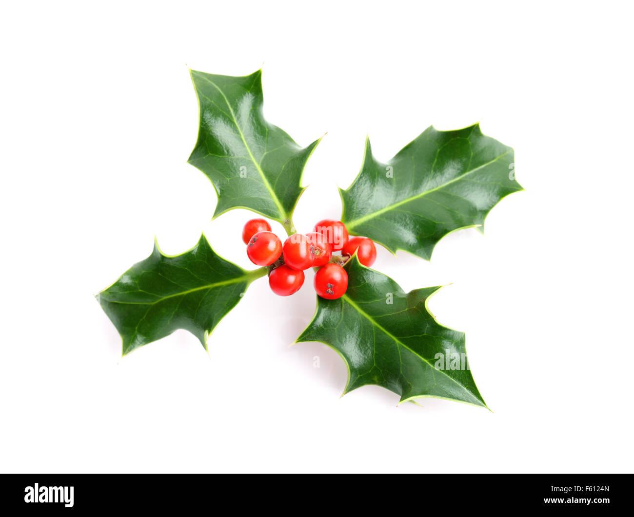 Christmas holiday holly decoration - Stock Image