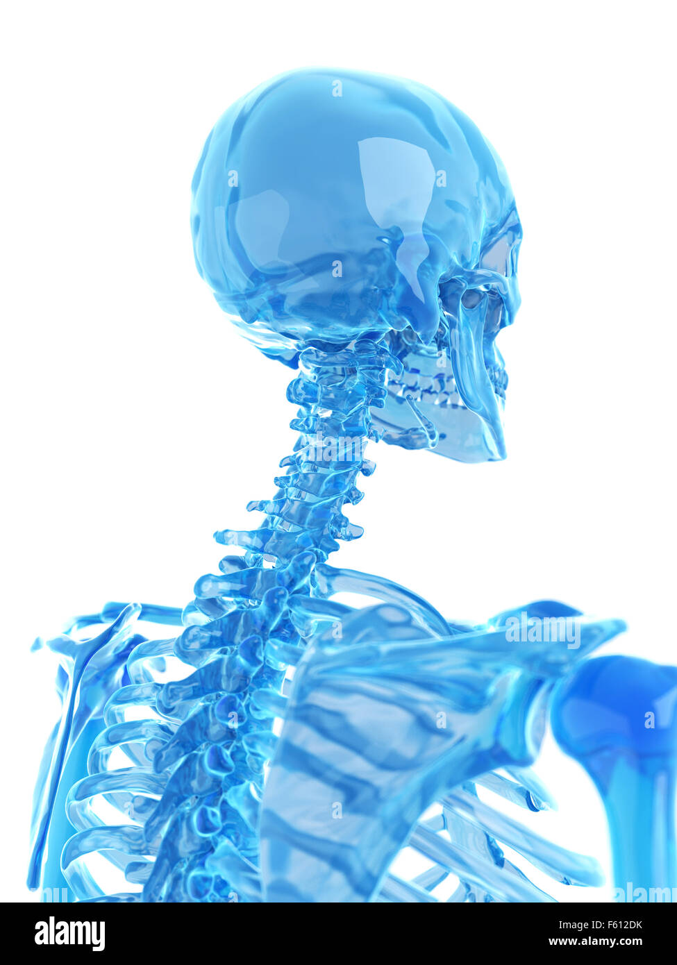medically accurate illustration of spine - Stock Image
