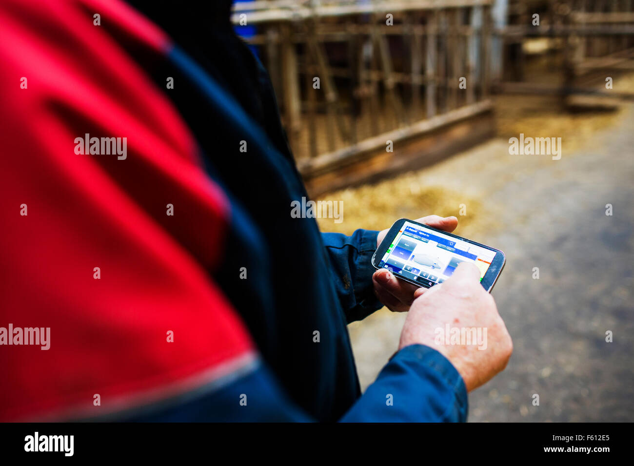 Human hand using smart phone at dairy farm - Stock Image