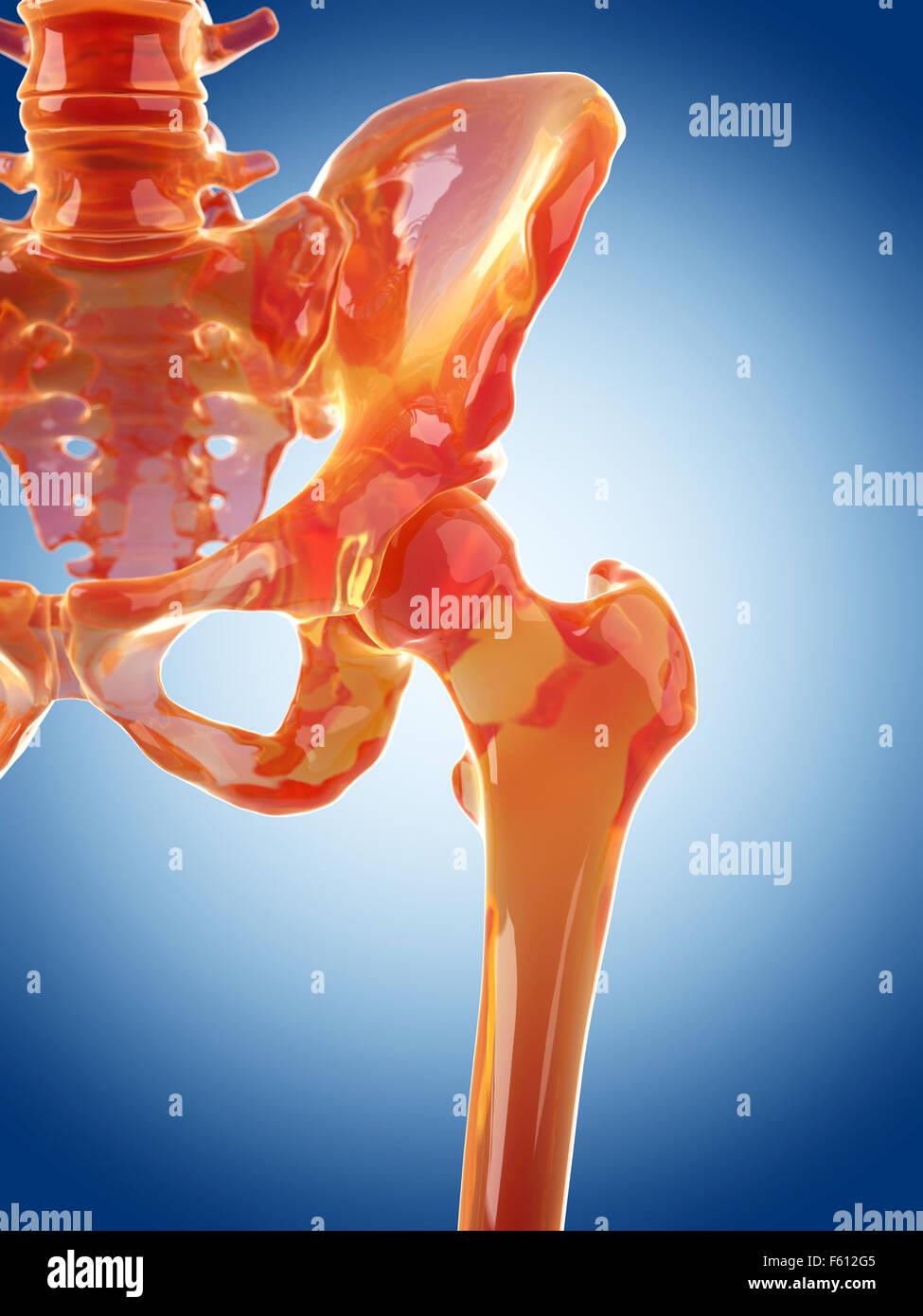 Glass skeleton illustration hip joint stock photo 89763749 alamy glass skeleton illustration hip joint ccuart Choice Image