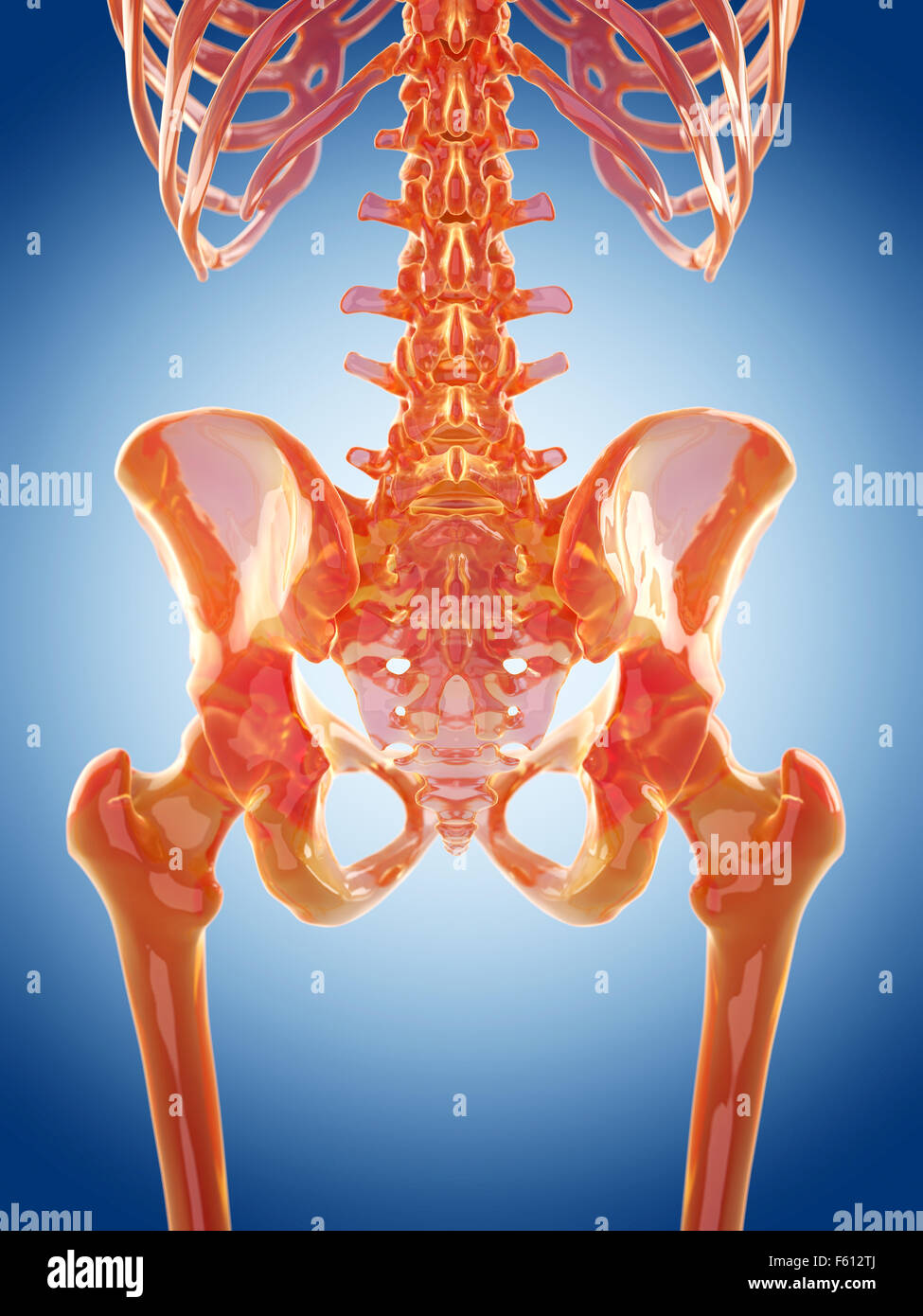 Human Hip Joint Stock Photos Human Hip Joint Stock Images Alamy