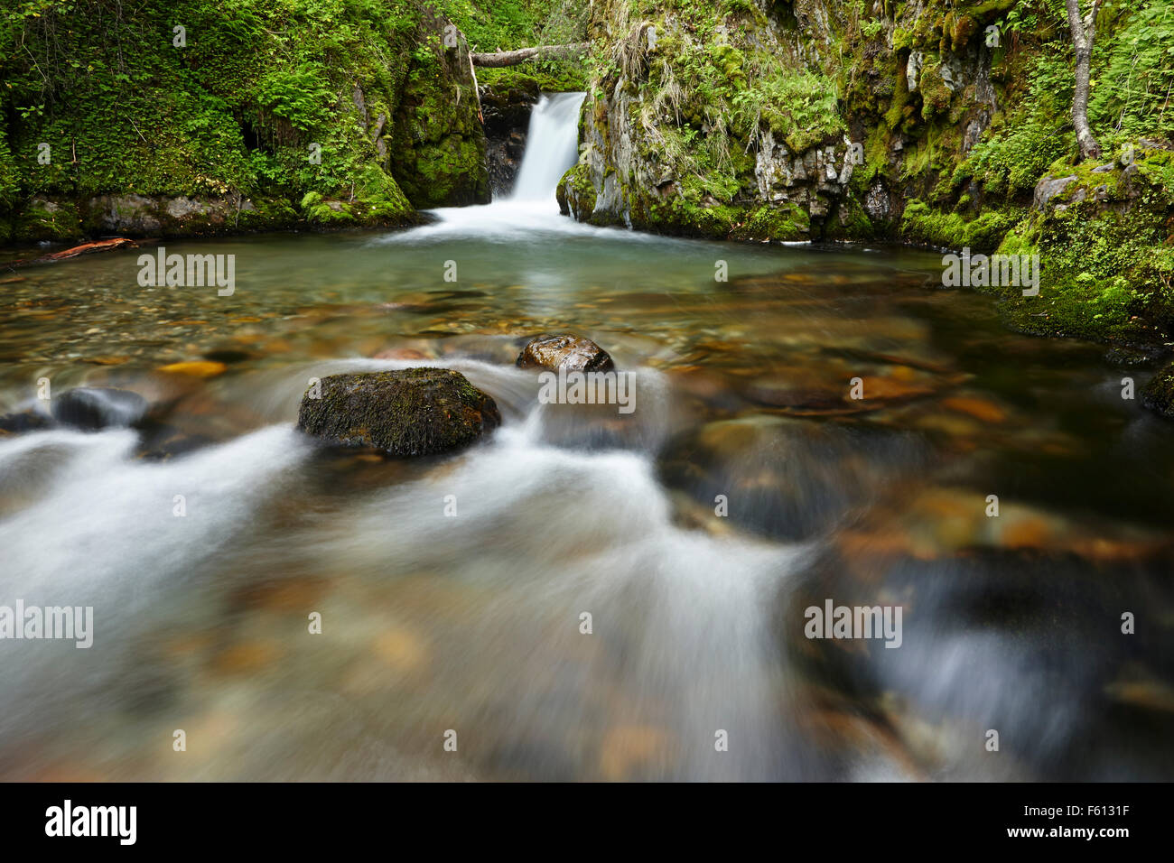 Stream, waterfall in rainforest, Tierra del Fuego National Park, Argentina - Stock Image