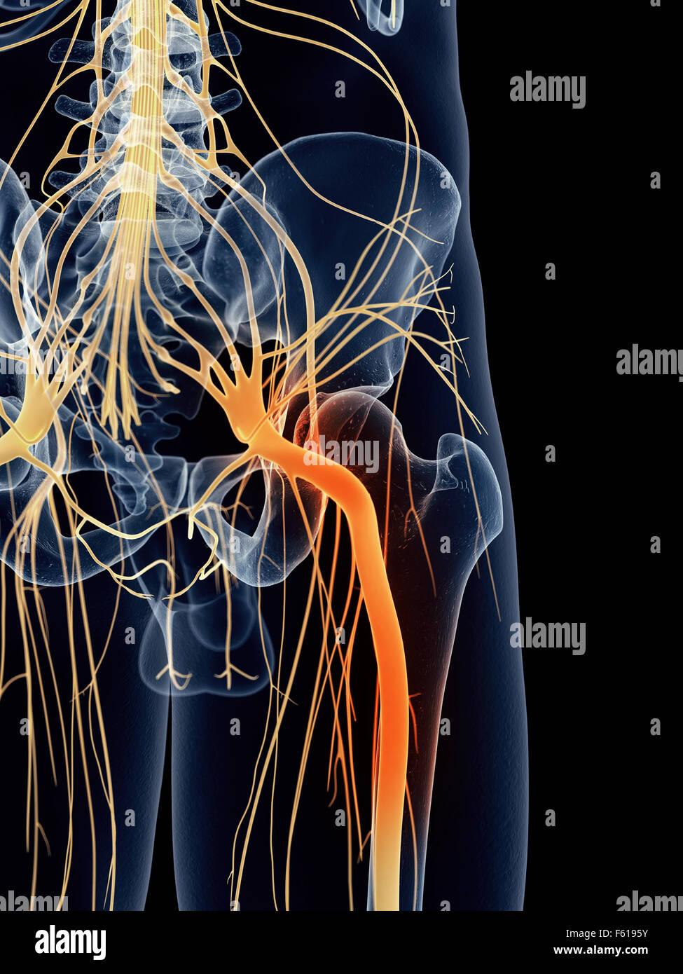 Medically Accurate Illustration Painful Sciatic Nerve Stock Photo