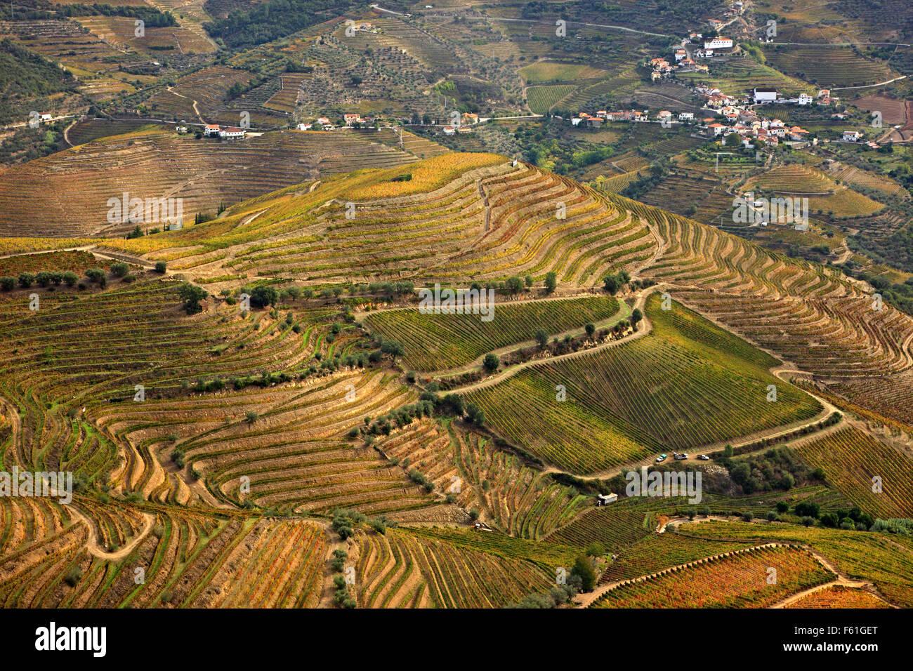 Vineyards in Pinhao valley in the heart of Alto Douro Wine Region (UNESCO World Heritage, Site), Porto e Norte, - Stock Image