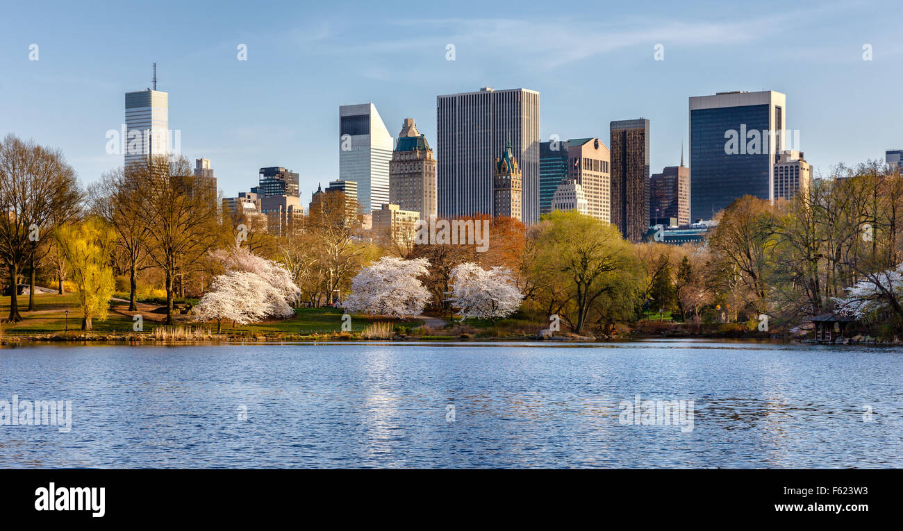 Spring in Central Park, with blooming Yoshino Cherry trees near The Lake. Eastern view of Manhattan skyscrapers, - Stock Image