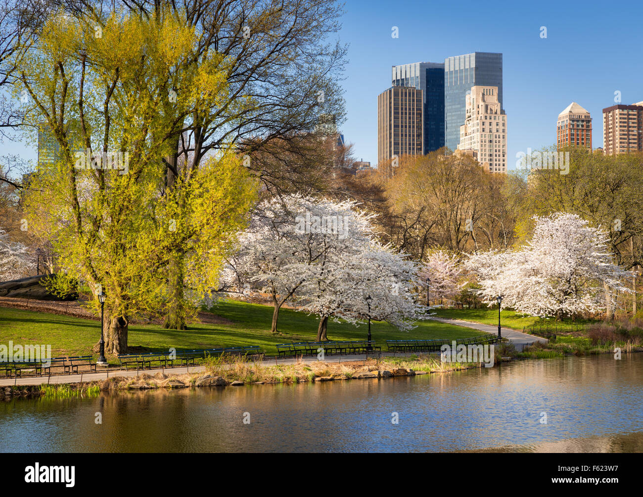 Central Park in Springtime, Blooming Yoshino Cherry Trees, Manhattan Upper West Side, New York City - Stock Image
