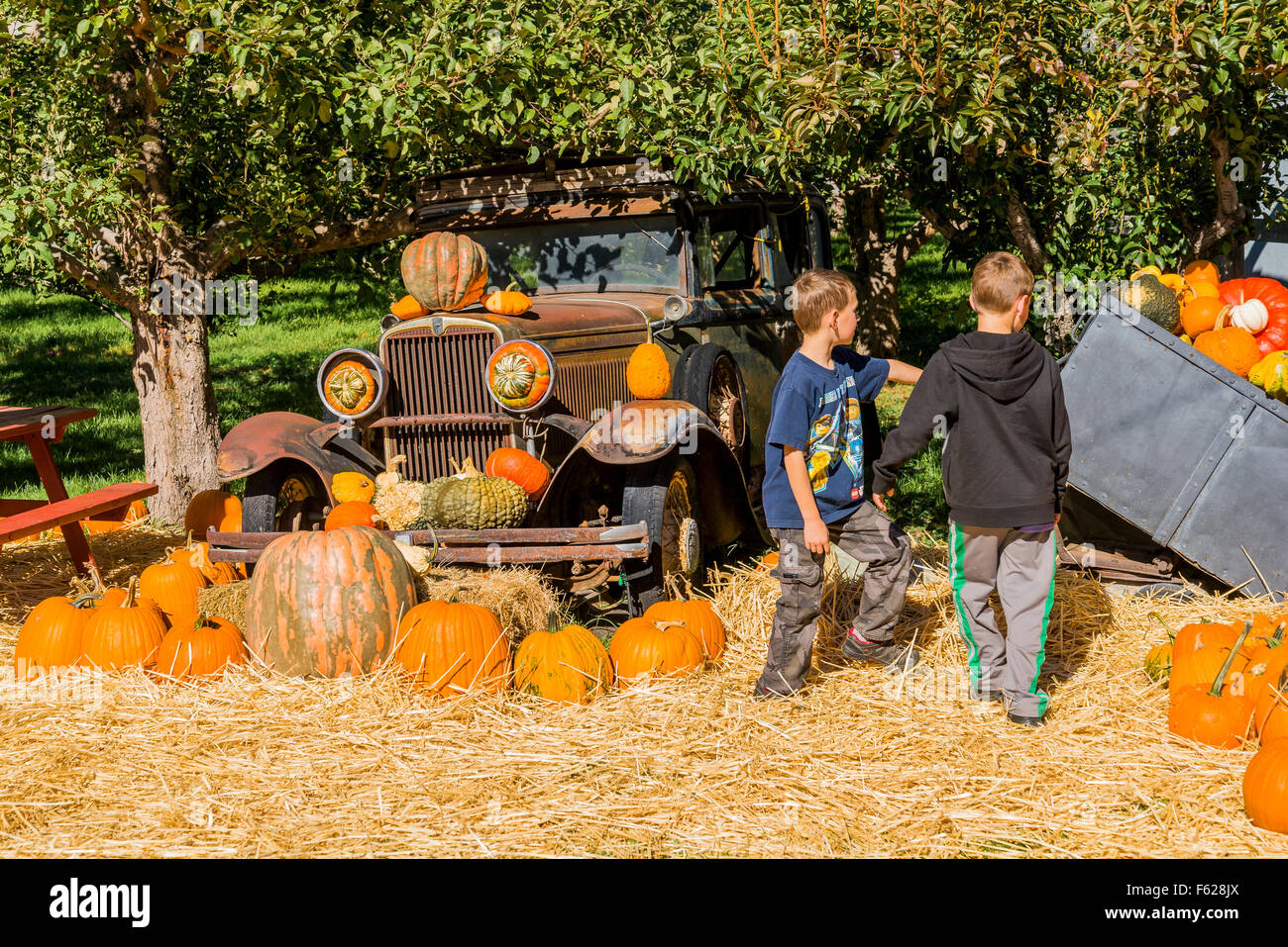 Boys check out old car and Fruit stand pumpkins, Keremeos, British Columbia, Canada - Stock Image