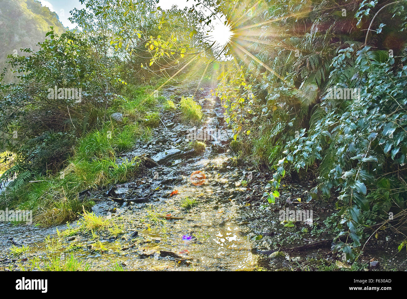 afternoon sun rays shining through the trees whilst exploring New Zealand Stock Photo