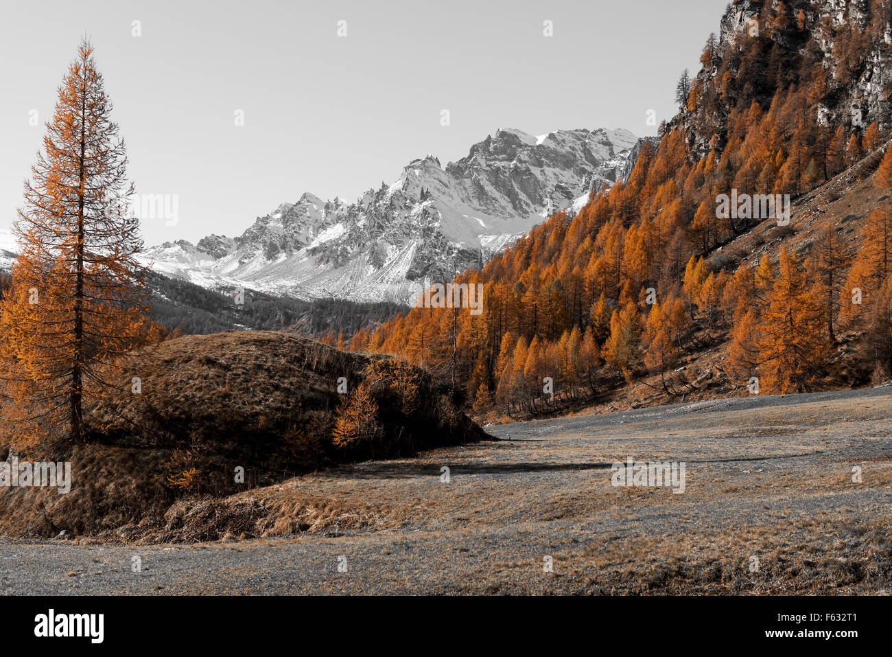 Autumn colors at the Devero Alp in a beautiful sunset with last ray of light on the larches, Piedmont - Italy Stock Photo