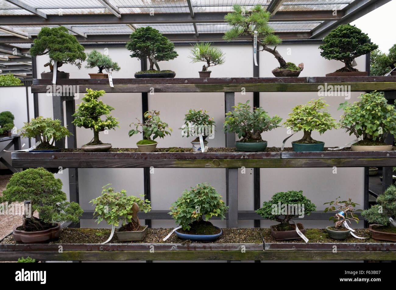 display of small bonsai trees for sale stock photo 89814263 alamy. Black Bedroom Furniture Sets. Home Design Ideas