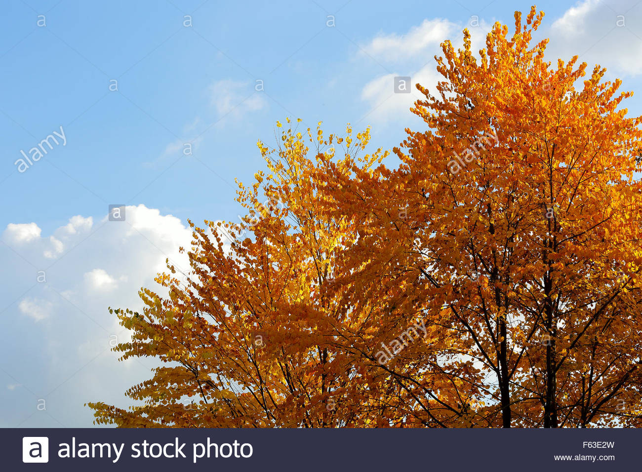 Trees in the Surrey Hills changing colour in the early autumn - Stock Image
