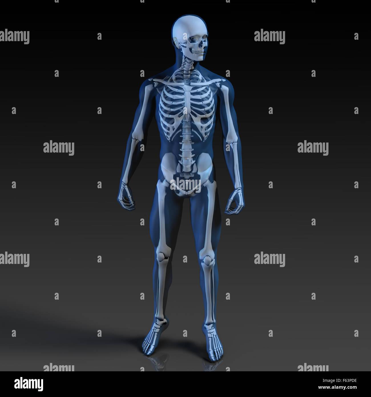 Skeleton Dummy Stock Photos & Skeleton Dummy Stock Images - Alamy