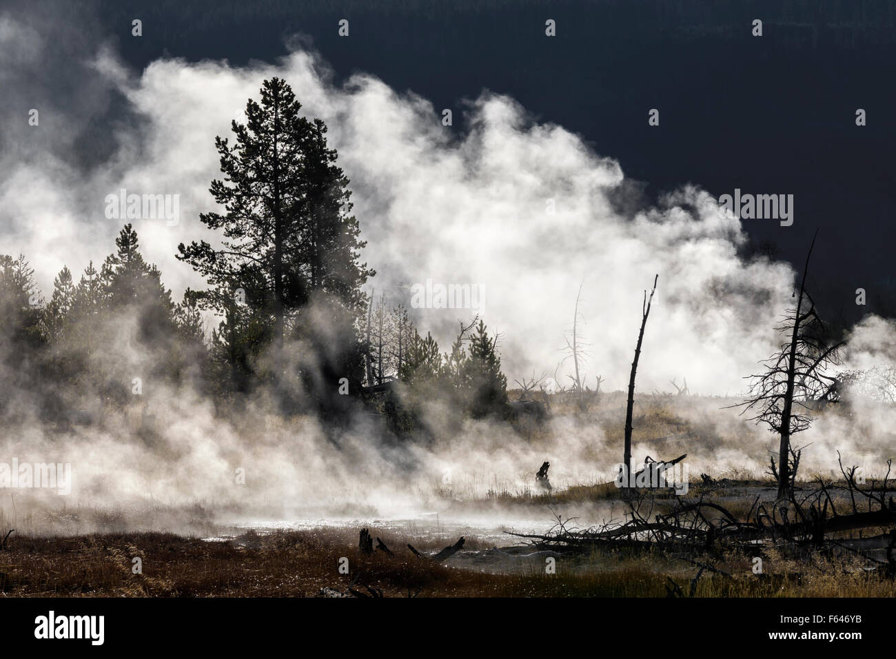 Yellowstone - Morning mists - Stock Image