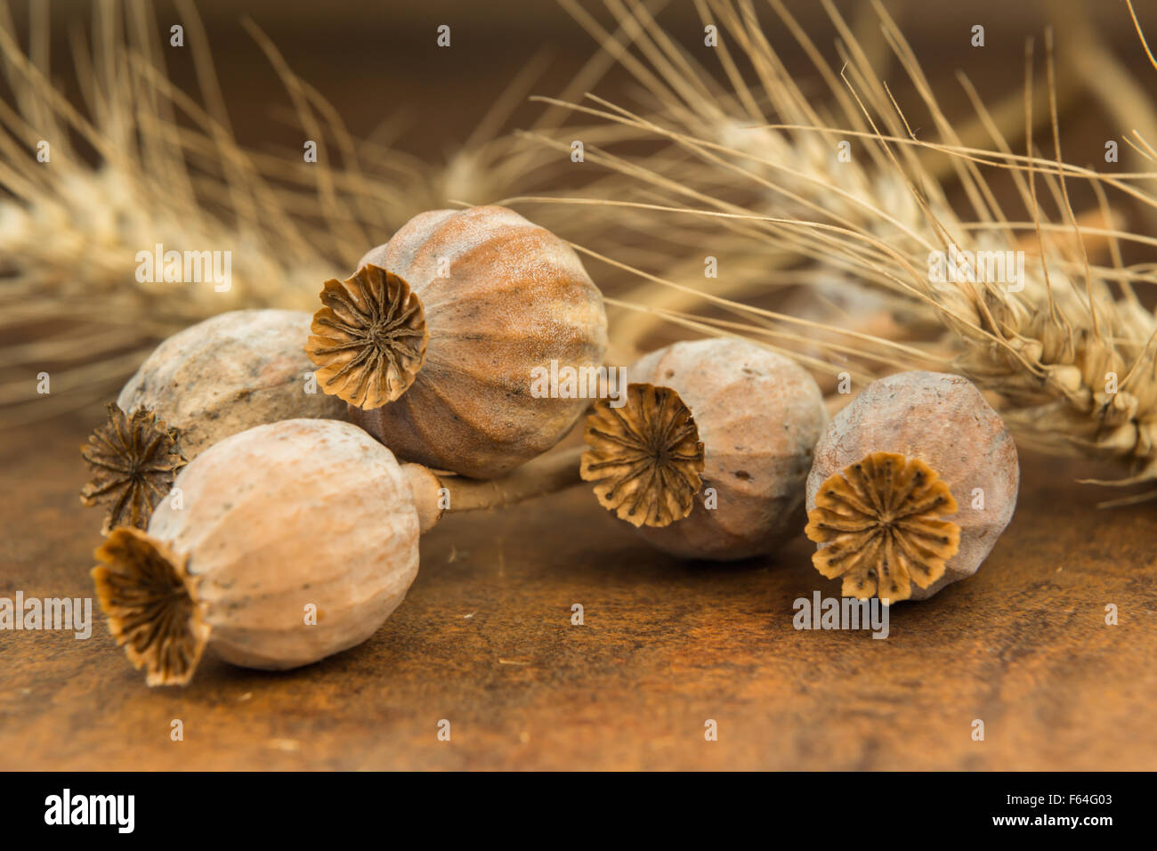 ripe dry poppy heads and wheat on an old table - Stock Image