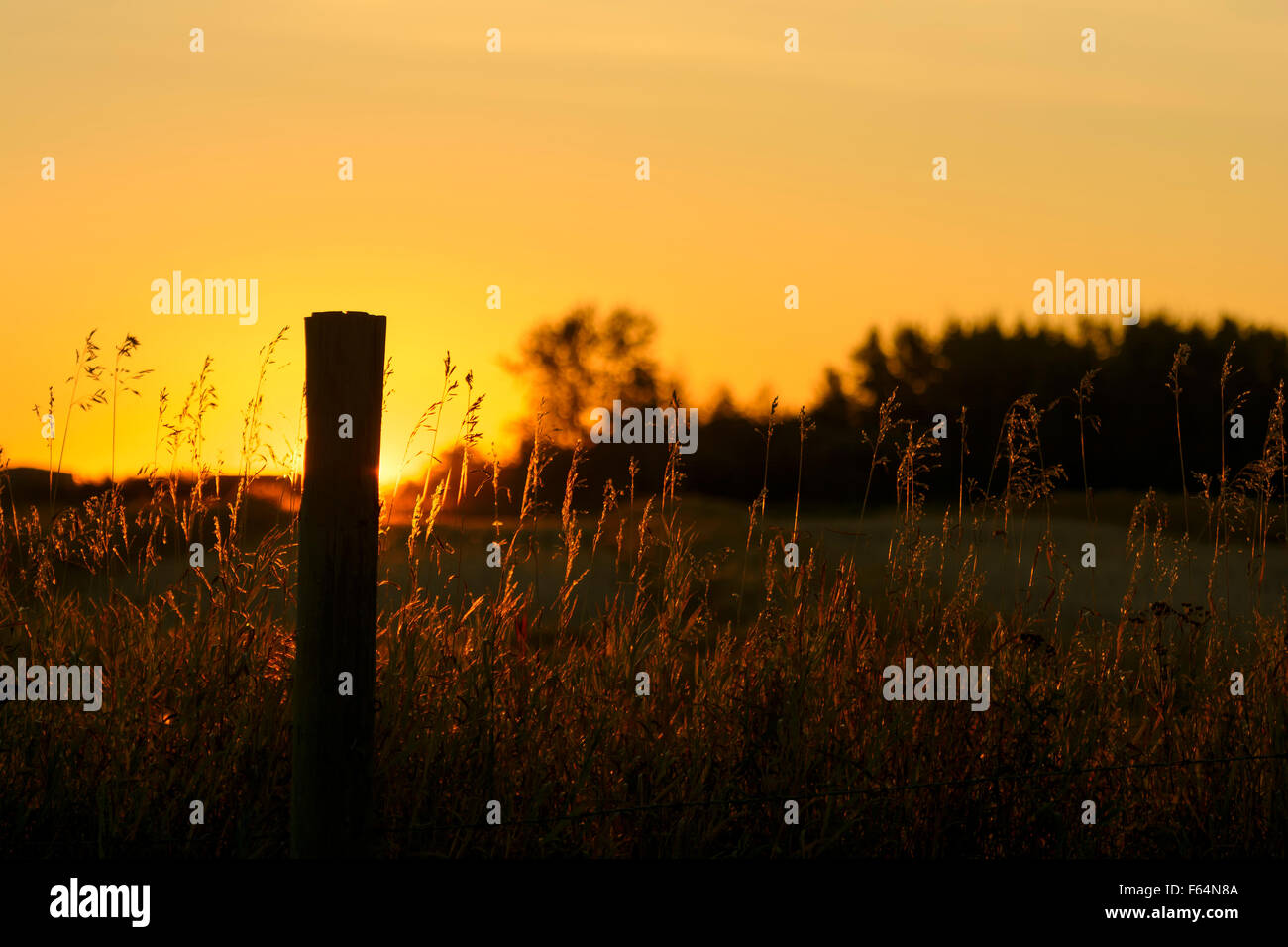 Fence post at sunset - Stock Image