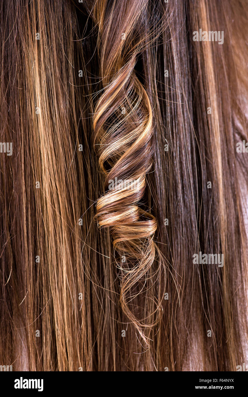 Single curled ringlet in brown hair with colored highlights in a hairstyling - Stock Image