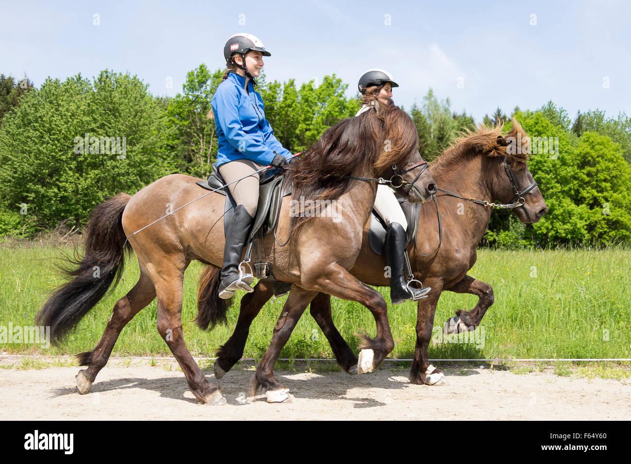 Icelandic Horse. Two women performing the toelt on stallionse. Austria - Stock Image