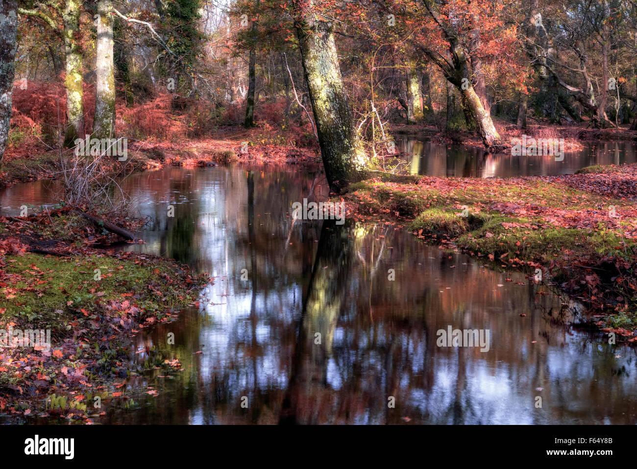 New Forest, Brockenhurst, Hampshire, England, UK Stock Photo